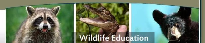 Wildlife Education